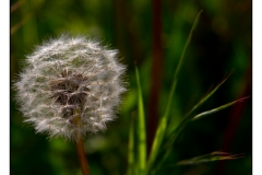 2012 Le printemps