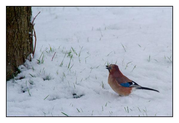 Neige et oiseau